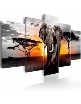 Schilderij - Elephant at Sunset