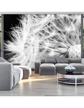 Fotobehang - Black and white dandelion
