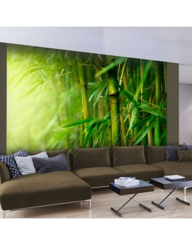 Fotobehang - jungle - bamboo