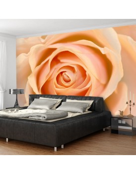 Fotobehang - Peach-colored rose