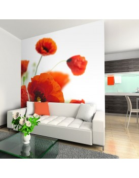 Fotobehang - Poppies on the wihite background
