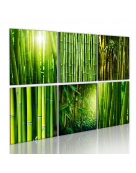 Schilderij - Bamboo has many faces